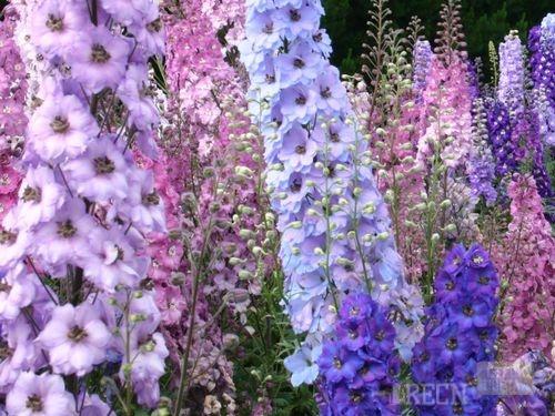 Цветы в саду высокие