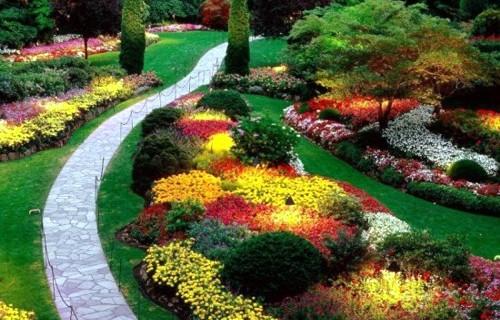 Фото летние клумбы с цветами