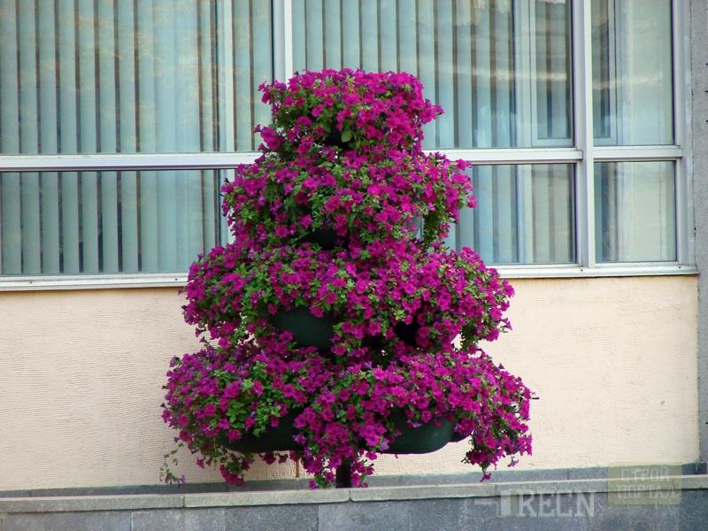 Цветы высокие своими руками
