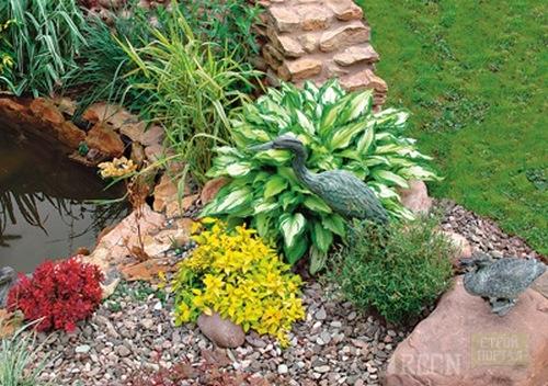 Растения для пруда на даче своими руками: обзор видов 67
