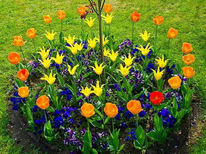 Многолетние цветы в клумбе