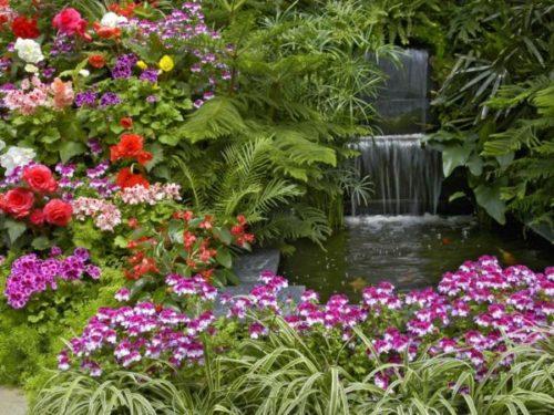 garden_plants-1024x768