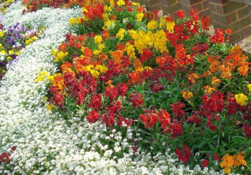 klumba-iz-odnoletnih-cvetov